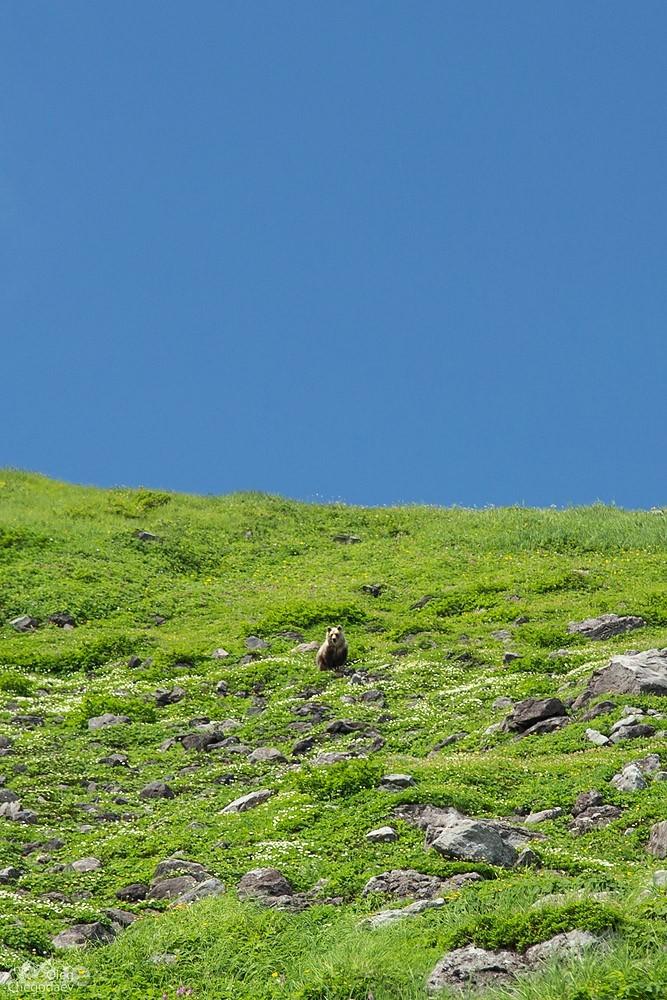 Медведь острова Итуруп