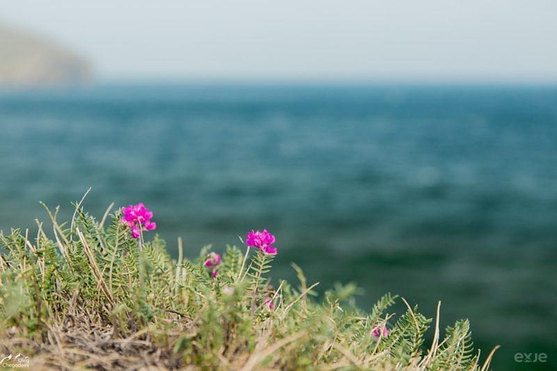Цветы на скалистом берегу острова Ольхон
