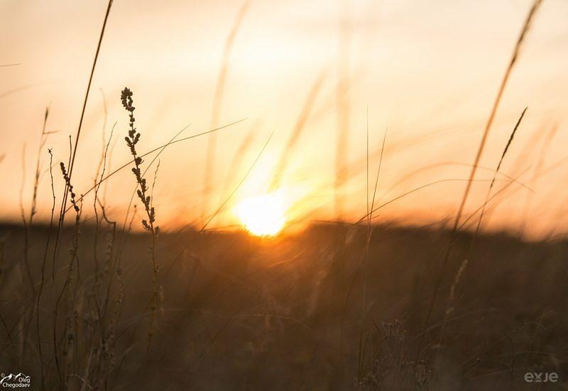 Восход на фоне степных трав