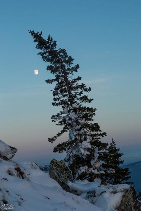 Вечер на склоне вершины 1168.7 Хребет Большая Сука