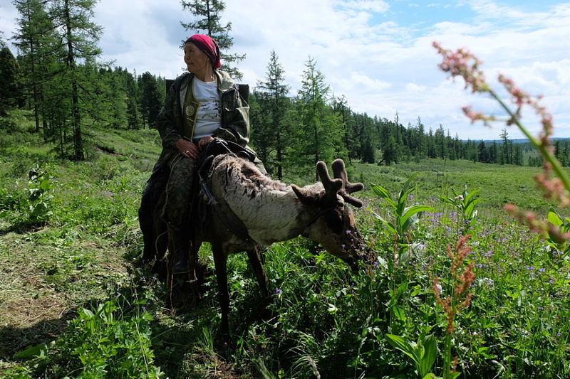 Экспедиция к тувинцам-тоджинцам