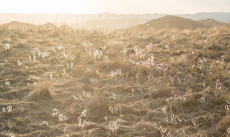Сон трава на закате