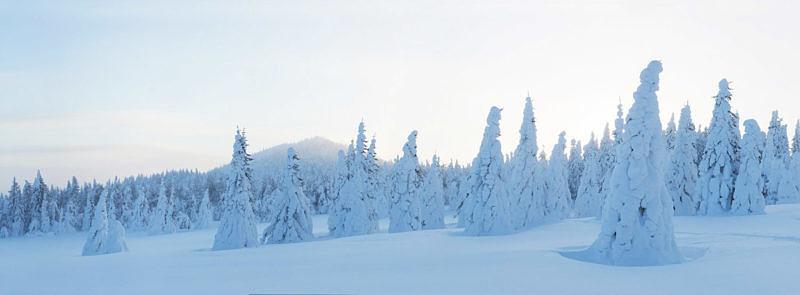 Южно-Уральский лес на хребте Ерикташ