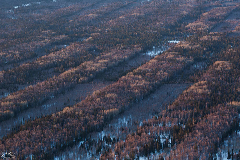 Следы от вырубок леса на Южном Урале