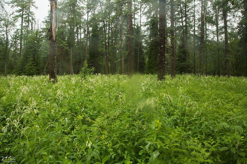 Еще одно неприятное летнее препятствие на пути туриста. Густая трава по голову, скрывающая камни и валежины