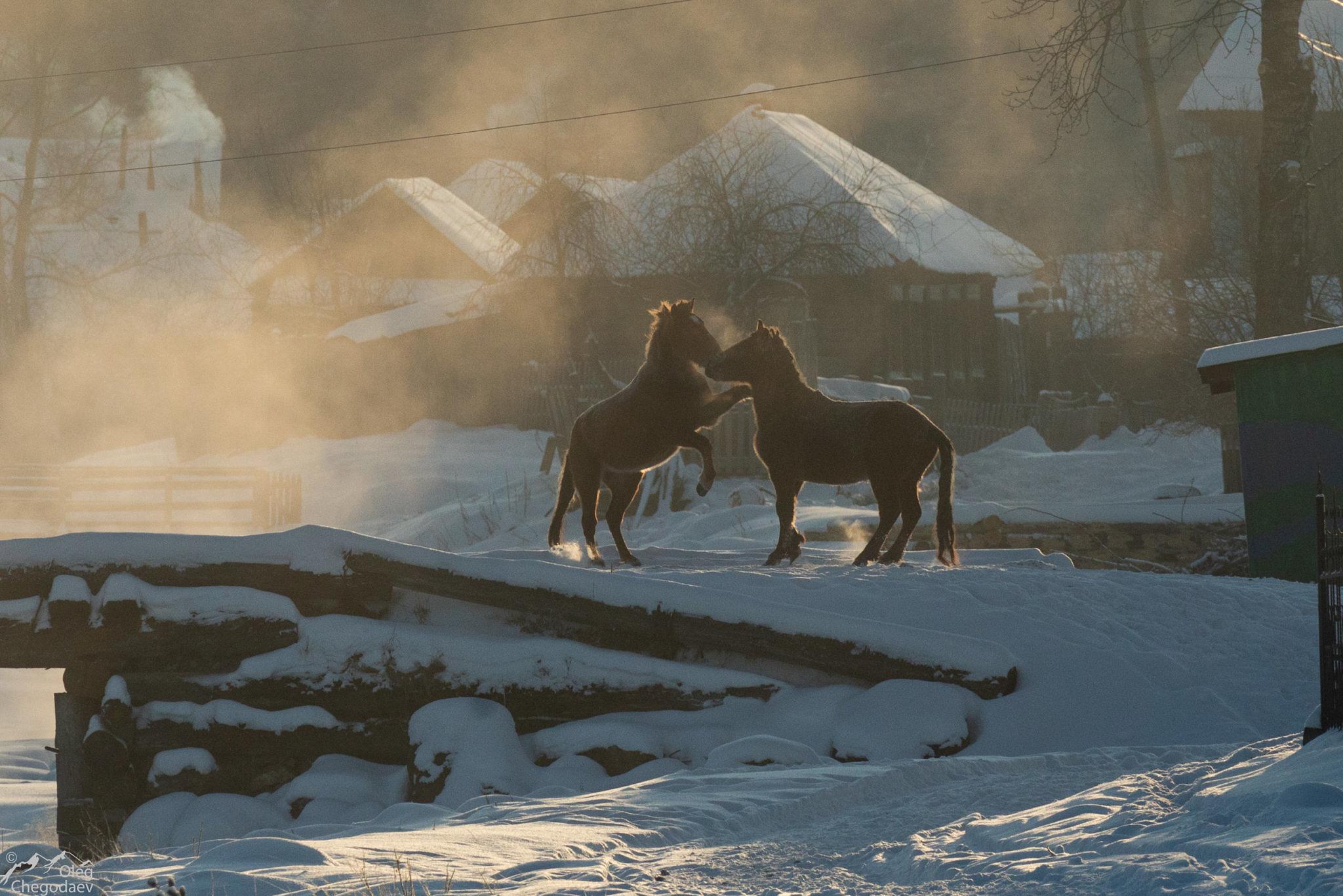 Лошади в деревне Тюлюк
