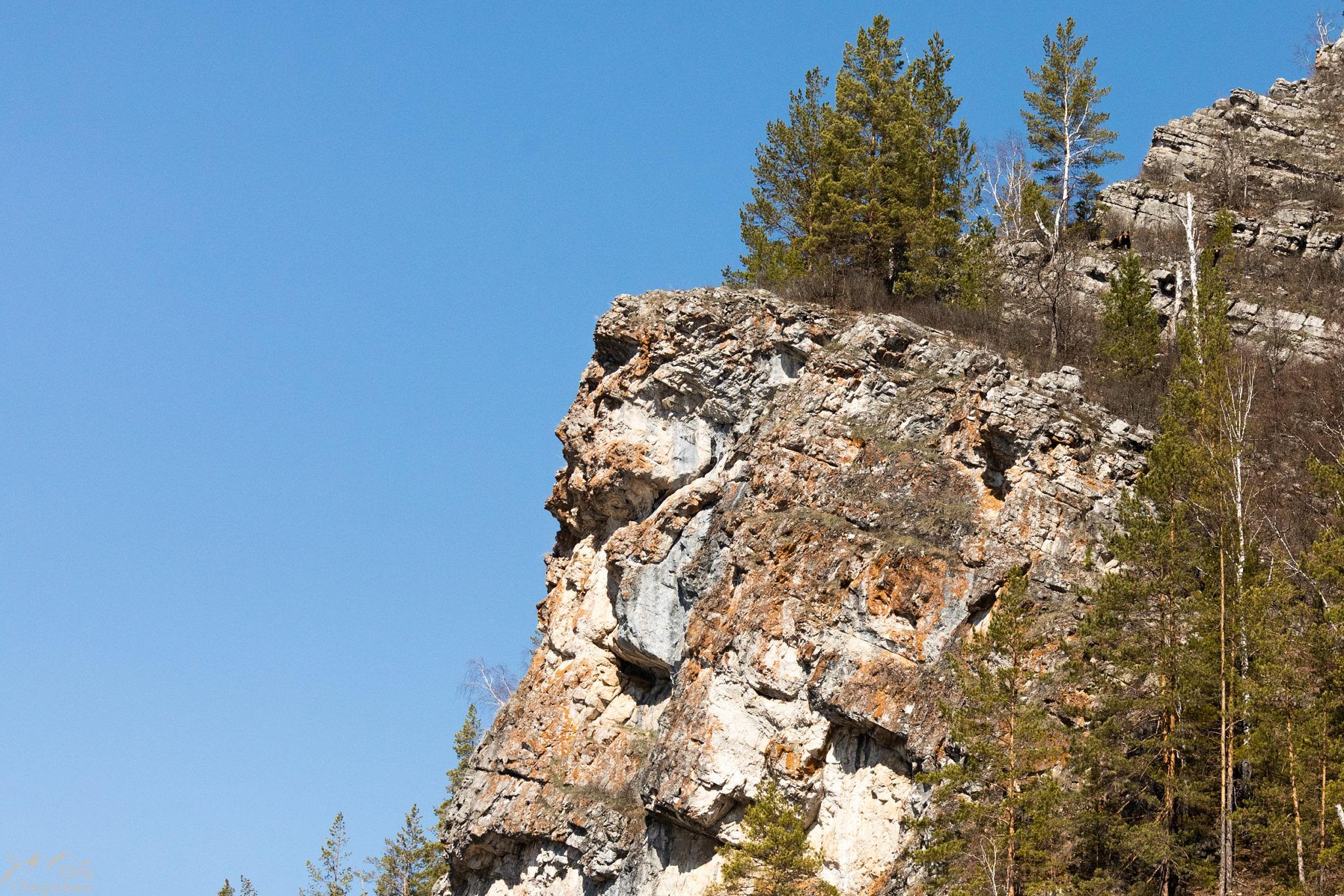 Медведи и антропометричный профиль скалы